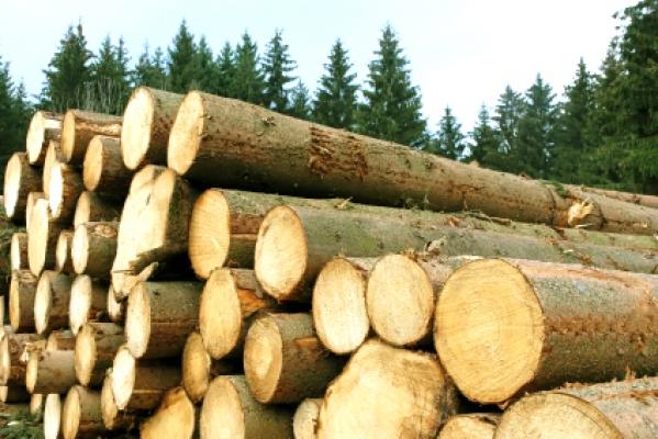 comercializarea cherestelei forestiere a face bani